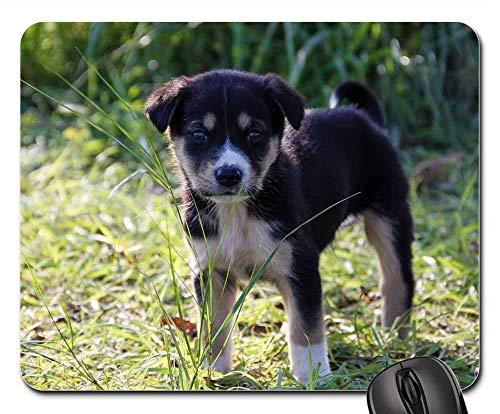 Gaming-Mauspads, Mauspad, Hundewelpen-Welpen-Baby-Tier-Tier-Tiere