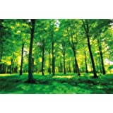 Fotomurale foresta - la foresta verde carta da parati - foresta, alberi, compensazione murale - 210cm x 140cm