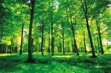 Foto mural Arboles - decoración pura naturalesa paisaje bosque calvero verano relajación sol plantas Flora forstal helechos-ramaI I foto-mural foto pó