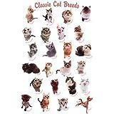 Gatos Póster Classic Cat Razas de perros (Incluye Artículo adicional)