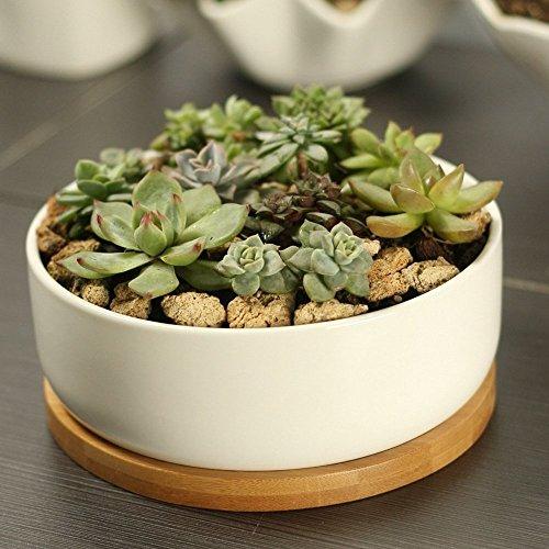 carnosas maceta redonda maceta de cerámica color blanco con de bambú de