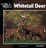 Whitetail Deer (Our Wild World) by Laura Evert (2000-09-01)