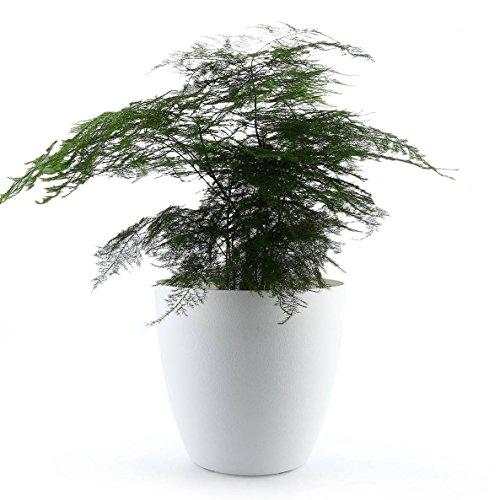 Mucihom vaso con sistema di auto-irrigazione bianco plastica 35cm il giro, set completo vaso fioriera da interno ed esterno per piante, fiori, erbe, violette africane decorativo desktop davanzale