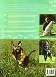 Image de CIEN TRUCOS PARA ADIESTRAR UN PERRO PERFECTO (Color) (Animales de Compañía)