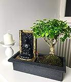BALDUR-Garten Bonsai-Baum mit dekorativem Buddha-Wasserfall;1 Stück