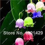 Pinkdose 100pcs / sac de raisin jacinthes chaÃne ampoule pour l'hiver des plantes d'intÃrieur bulbe bonsaï fleurs livraison de fleurs en pot gratuit