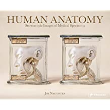 Human Anatomy. Stereoscopic Images of Medical Specimens