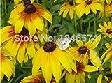 Promozione 500 pc / sacchetto, semi di clematide, clematis pianta semi di fiori, clematis trasmetteremo i colori misti totale 500 per giardino di casa Novel