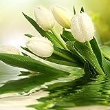Brightup 100 Pieces Tulip Graines Mélange de couleur Jardin Bonsai Graines de fleurs