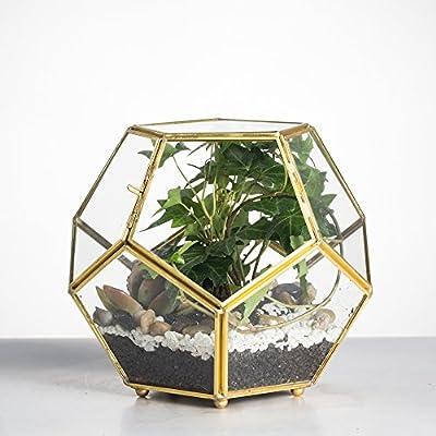 Schließen-Beiner Gold Kupfer Messing Glas Geometrische Terrarium mit Tür Pentagon Ball Form Schließen Farn Moos Sukkulente, Übertopf Display Topf Box 17,5 x 17,5 x 15 cm. von NCYP auf Du und dein Garten