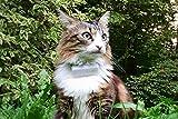 Weenect Cats - GPS Halsband für Katzen