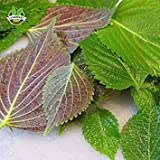 PLAT FIRM KEIM SEEDS PLATFIRM-HOO Produkte- 1000 Perilla Kräutersamen Red Leaf Shiso Gemüsesamen für das Pflanzen im Topf und Boden Köstlich duftenden Kräuter Brand New