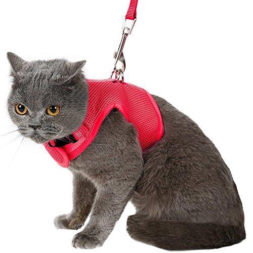 Bingpet, pettorina per gatto, a prova di fuga, con guinzaglio, regolabile, con morbido reticolato, perfetta per portare a spasso il gatto