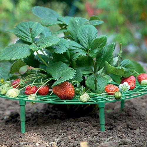 Tianranrt❄ Las Ayudas Para El Crecimiento de Las Plantas de FresaMantienen Las...