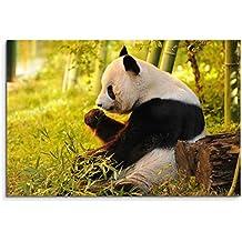 Sitzender Pandabär beim Essen Tasse Geschenk Tierfotografie
