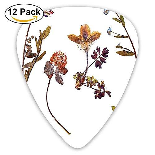 Print Tulip Rock (Book Dried Cute Flowers Lilacs Daisies Tulips Leaves Garden Buds Art Print Guitar Picks 12/Pack)
