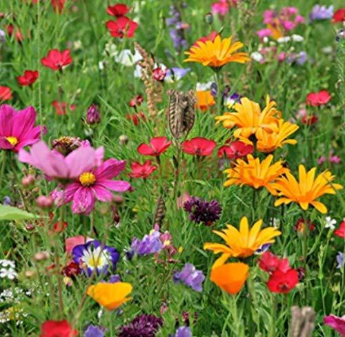 """Tomasa Samenhaus- Wildblumen 'Mischung""""Schmetterlinge und Bienen""""Mehrjährige Blumenmischung - Blumenwiese,Seltene Wildblumen Samen winterhart Wildblumen& Kräuter Mix"""