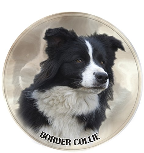 Border Colllie Autocollant 15 cm