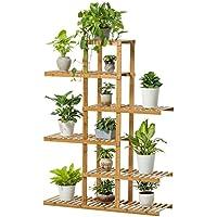 Amazon.fr : plante bambou - Depuis 1 mois : Jardin