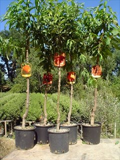 La top 10 piante da frutto in vaso consigli d acquisto for Piante acquisto