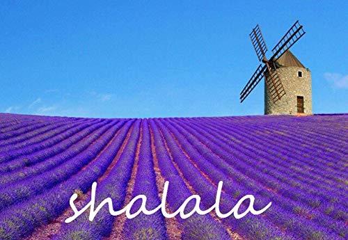 200Pcs Provence Lavendel Super-Fragrant Bio Imported Blumenpflanzen im Freien Easy Care Bonsai für Heim & Garten Bonsai: 1 -