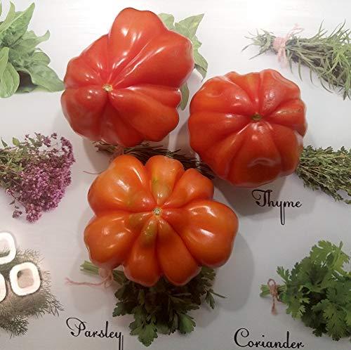 Ochsenherz-Tomate - Tomaten Cuor di Bue - 25 Samen