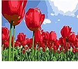 Yangll Malen Nach Zahlen, Schöne Rote Tulpen Unter Dem Himmel, Blumen Ölgemälde, DIY Acrylbild Auf Leinwand Kein Gerahmt 40X50Cm