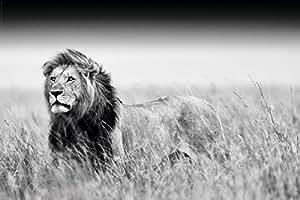 Poster Lion en noir et blanc (91,5cm x 61cm)
