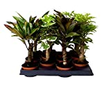 Stem mix- Great mix of long-stemmed indoor plants - Best Reviews Guide