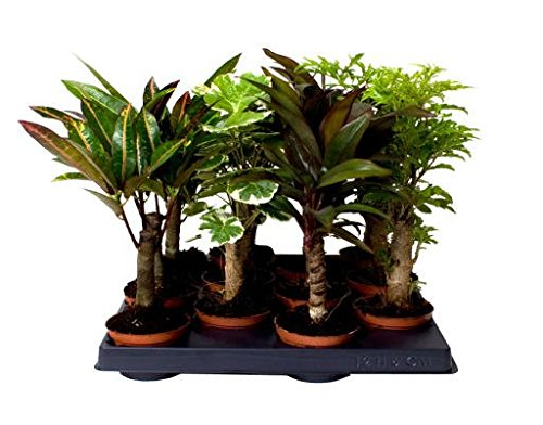 stem-mix-great-mix-of-long-stemmed-indoor-plants-for-your-home-or-office-add-a-touch-of-the-outdoors