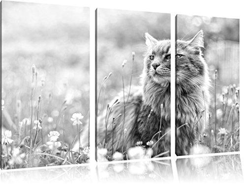 Cat in 3 pezzi immagine selvatico Arte B & W immagine tela 120x80 su tela, XXL enormi immagini completamente Pagina con la barella, stampe d