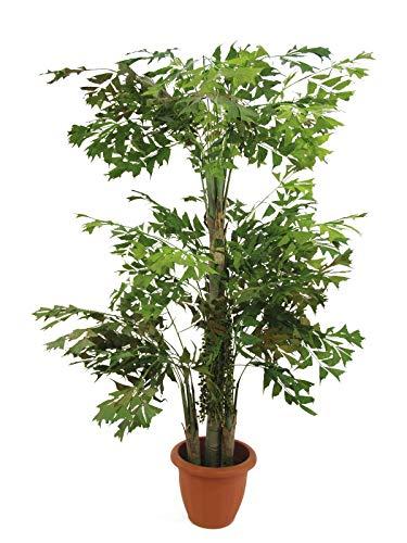 artplants Set 'Künstliche Fischschwanzpalme + Gratis UV Schutz Spray' - Kunstbaum Fishtail Palme Jeffrey, mit Früchten, grün, 380 cm