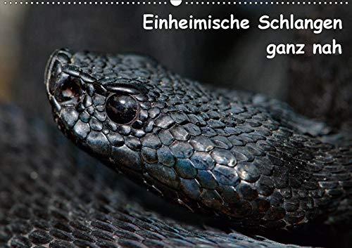 Einheimische Schlangen ganz nah (Wandkalender 2020 DIN A2 quer): Portraitaufnahmen einheimischer Schlangen (Monatskalender, 14 Seiten ) (CALVENDO Tiere)