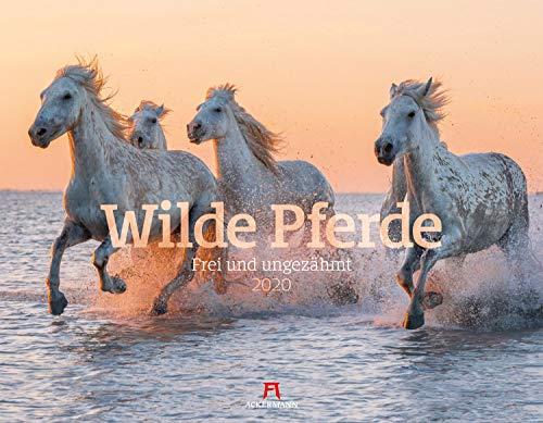 Wilde Pferde 2020, Wandkalender im Querformat (54x42 cm) - Tierkalender / Pferdekalender mit Monatskalendarium