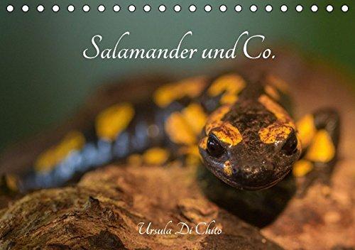 Salamander und Co. (Tischkalender 2017 DIN A5 quer): Salamander und andere Tiere in Feuchtgebieten (Monatskalender, 14 Seiten )
