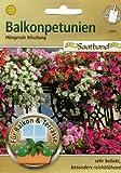 Balkonpetunien Hängende Mischung Saatband für Balkon & Terrasse sehr beliebt besonders reichblühend Petunia 53040