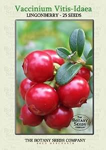 Vaccinium Vitis-Idaea (25) Graines - Airelles Semences [Lingonberry / Cowberry]