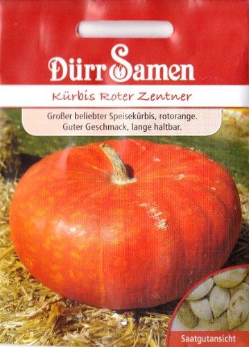 Kürbis, Roter Zentner, ca. 6 Samen