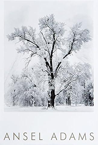 Oak Tree, Snowstorm, Yosemite National Park, Cailfornia (Oak Poster)