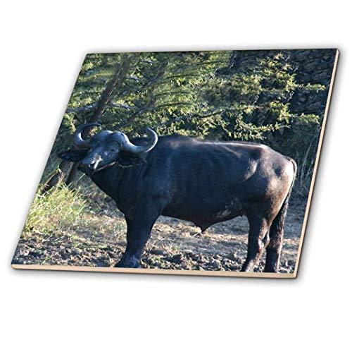 South Buffalo (3dRose CT 20120_ 4South African Buffalo Seite View Face View Keramik Fliesen, 30,5cm)
