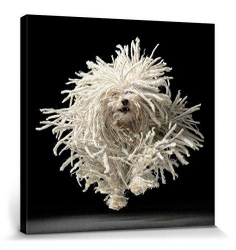 1art1 Set: Hunde, Wischmop Terrier, Tim Flach Poster Leinwandbild auf Keilrahmen (40x40 cm) + 1x Aktions-Home-Deko Artikel