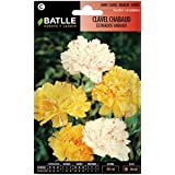 Semillas de Flores - Clavel Chabaud Doble estriado variado - Batlle