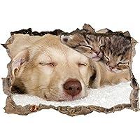 Suchergebnis Auf Amazon De Fur Katze Hund Malerbedarf Werkzeuge