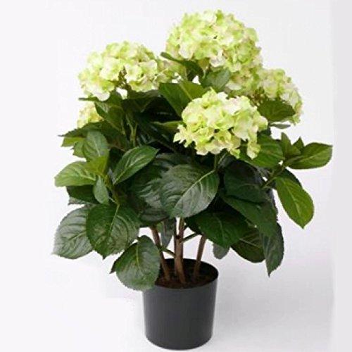 Trauer-Shop Künstliche Hortensie creme grün - Kunstblume Hortensienpflanze. H 36cm. (Creme Seidenblumen Hortensien)