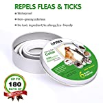 u-picks dog flea collar,6 months flea and tick control protection for dogs cats,adjustable size&waterproof,stop pest bites&itching(grey) U-picks Dog Flea Collar,6 Months Flea and Tick Control Protection for Dogs Cats,Adjustable Size&Waterproof,Stop Pest Bites&Itching(Grey) 51wRPfMXqcL