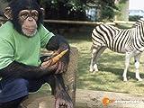 Charly und die Zebrafrau