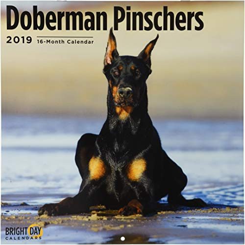 Doberman Pinschers 2019 (BREEDS)