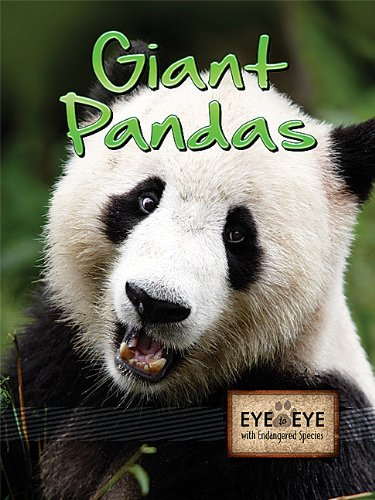 Giant Pandas (Eye to Eye with Endangered Species (Paperback))