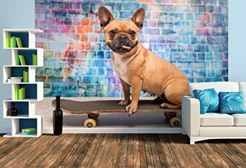 Premium Foto-Tapete Franz. Bulldogge auf Skateboard (versch. Größen) (Size L   372 x 248 cm) Design-Tapete, Wand-Tapete, Wand-Dekoration, Photo-Tapete, Markenqualität von ERFURT