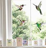 Stickers4 Vogel Fensteraufkleber zum Schutz vor Vogelschlag - 4 schöne Kolibri Glassticker, doppelseitig und selbstklebend zum Schutz vor Vogelkollisionen